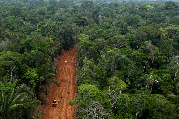 Amazon rainforest road for oil development