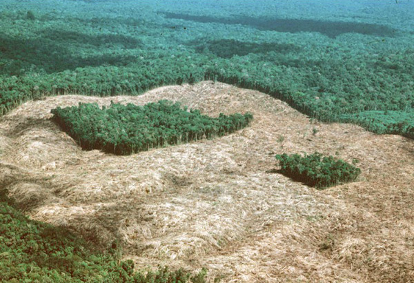 An aerial photo of a forest fragment immediately following clearance in the 1980s as part of the Biological Dynamics of Forest Fragments Project.