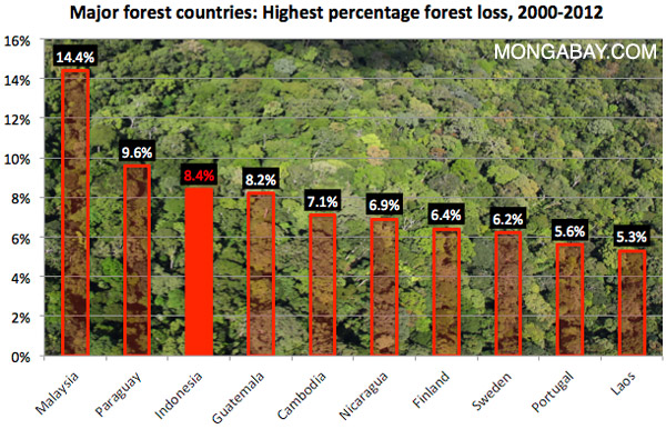 Highest forest loss rate chart