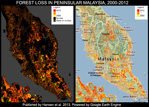 Malaysia has the world's highest deforestation rate, reveals Google
