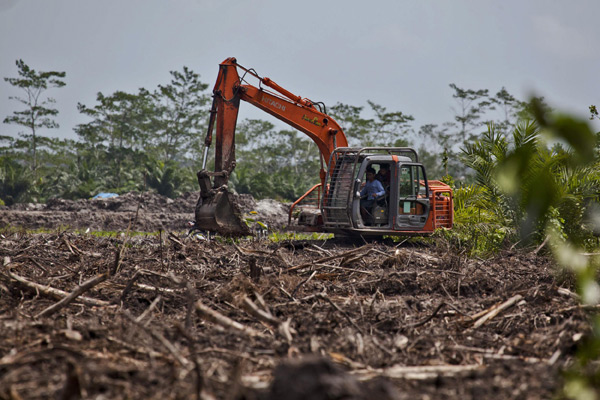 Clearance for oil palm plantations near Tanjung Puting National Park
