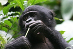 Bonobo market research - 3 part 1