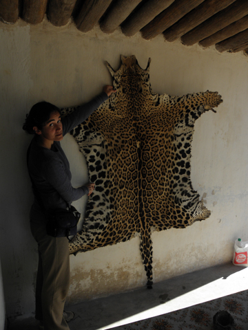 Biologist Veronica Quiroga with a jaguar pelt hunted in the Argentinean Chaco.