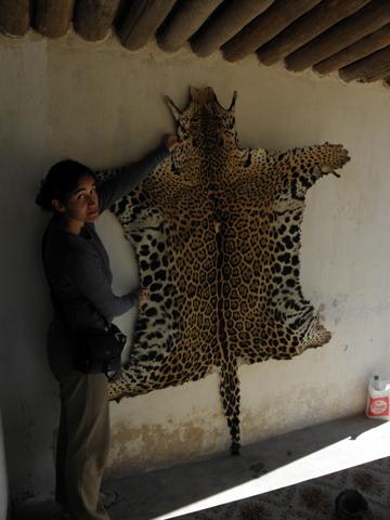 La bióloga Verónica Quiroga con la piel de un jaguar cazado en el Chaco. Foto cortesía de Verónica Quiroga.