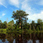 Peat forest in Borneo [kalteng_0680]