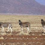 namibia_1593
