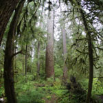 Temperate rainforest in Washington's Olympic National Park