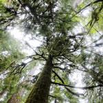 Temperate rainforest on Washington's Olympic Peninsula