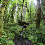 Temperate rain forest creek in the Pacific Northwest