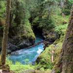 Blue water of the Quinault river