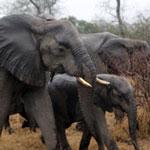 south_africa_kruger_0517