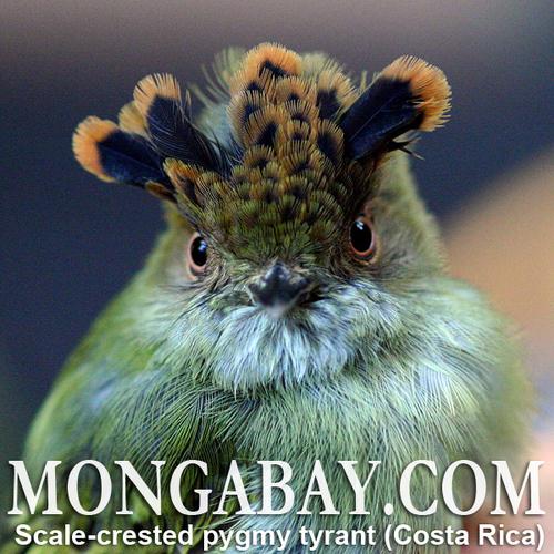 names.mongabay.com