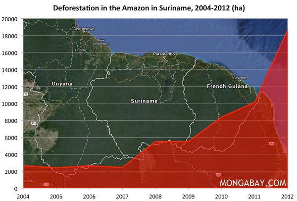 Chart: Deforestation in the Amazon in Suriname