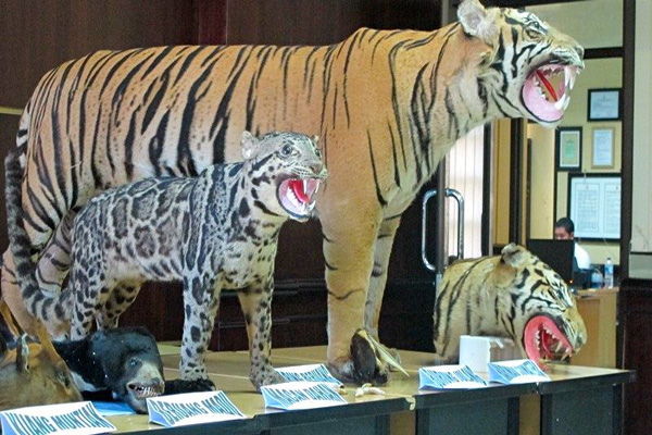 Garish stuffed wildlife seized by Aceh police.