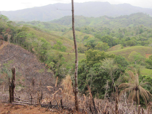 Agua Salud landscape, with a recently slashed and burned secondary forest on the foreground. The forest patch was about 15 years old. Not the best photo, but very relevant with regard to the paper! Author: Jake Slusser