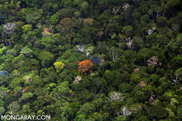 Diversity of rainforest trees in the Amazon