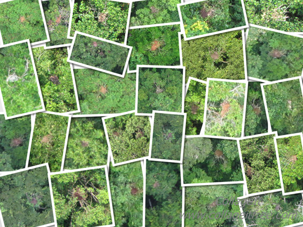 Collage of photos showing orangutan nests taken from a conservation drone.
