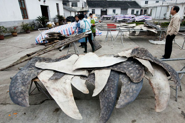 Shark slaughterhouse at Pu Qi
