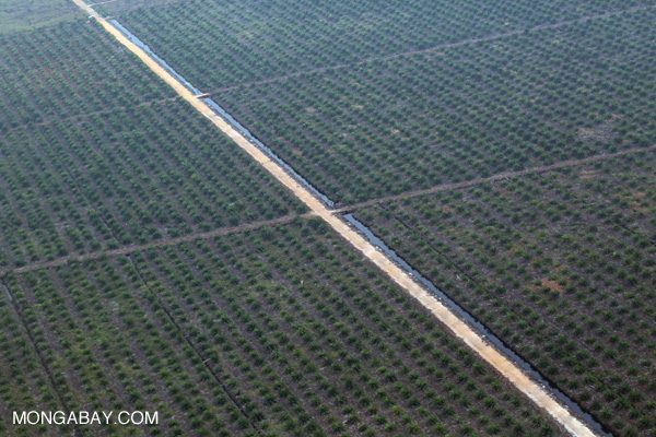 Oil palm plantation on drained peatlands in Riau in February 2014