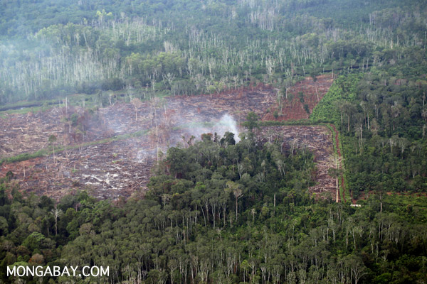 Peat forest going up in flames for palm oil production in Riau, Indonesia.