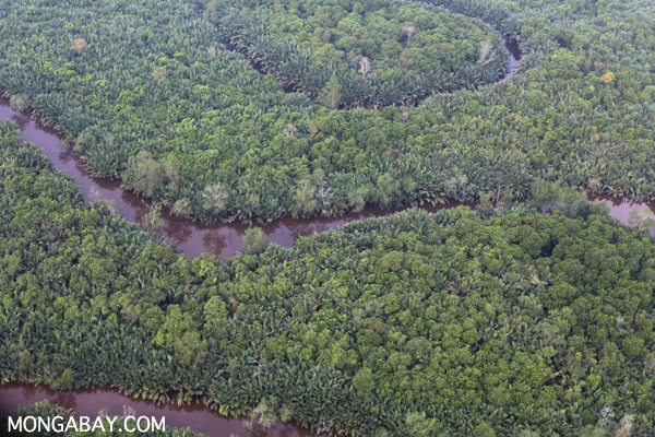 Primary peat forest in Sumatra. Photo by Rhett A. Butler.