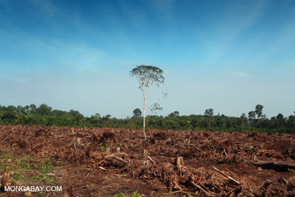 Deforestation for oil palm in Riau Province on the island of Sumatra. Photo by Rhett A. Butler.