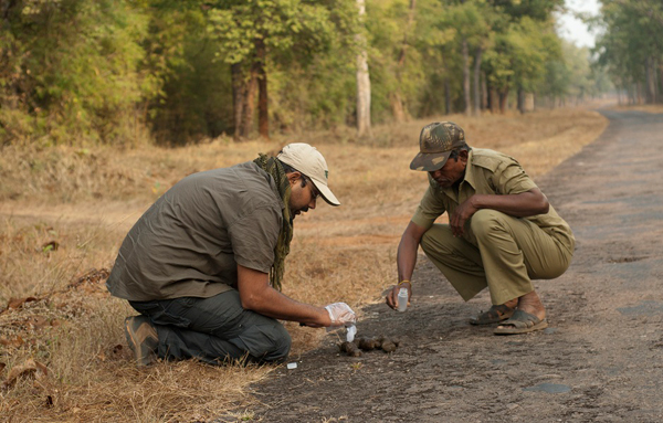 Lead author Aditya Joshi (left) collecting a scat sample. Photo credit: Aditya Joshi