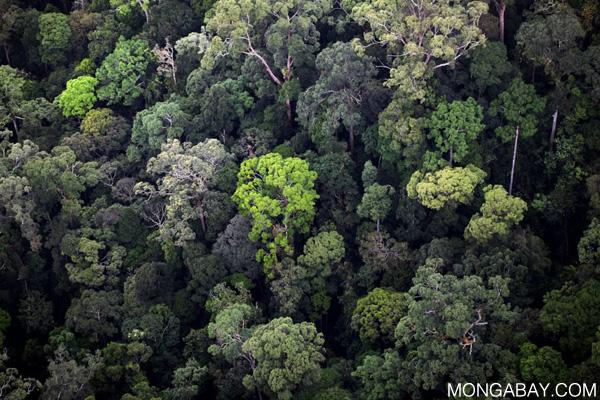 Rainforest in Sabah.
