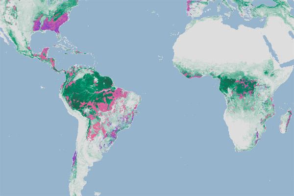 2000~2012年の間の樹高および森林の増減を示したグローバル・フォレスト・ウォッチのマップ