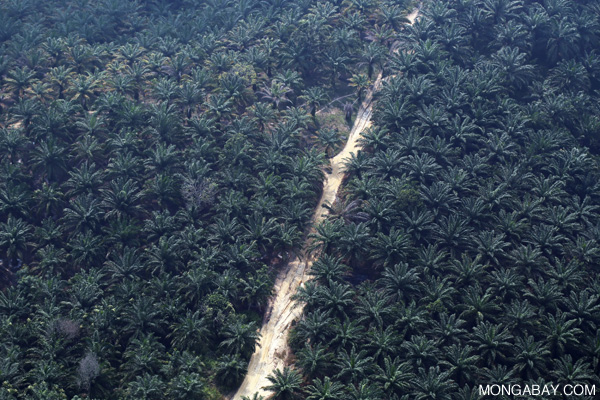 Oil palm plantation in Riau. Photo by: Rhett A. Butler.