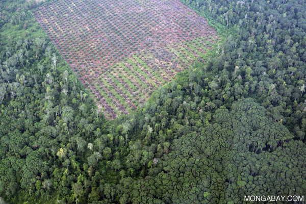 Deforestation for oil palm development in Riau. Photo by: Rhett A. Butler.