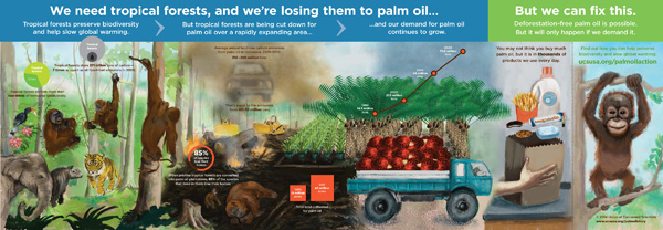 Palm oil infographic.