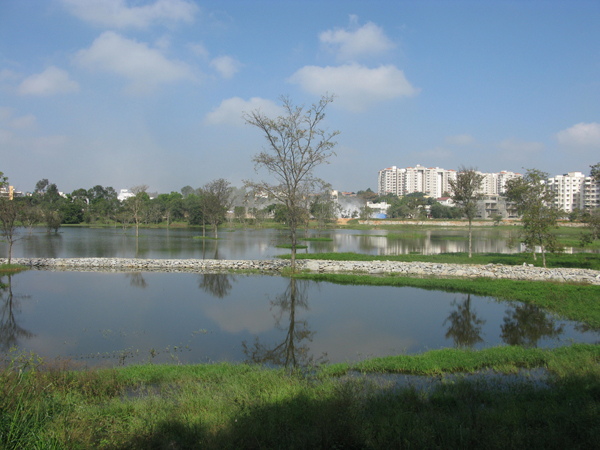 Kaikondrahalli Lake, which has been recently restored through an innovative program of community government partnership. Photo credit: Harini Nagendra.