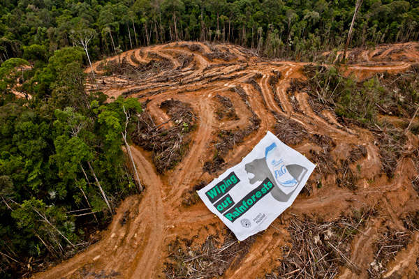 Concession owned by PT Multi Persada Gatramegah (PT MPG), a subsidiary of Musim Mas company, a palm oil supplier to Procter and Gamble in Muara Teweh, North Barito, Central Kalimantan.