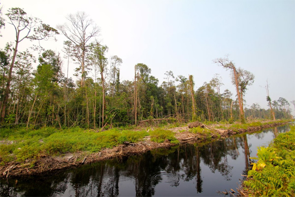 Drainage canal that forms the boundary between the remaining peat forest and the area cleared for the group led by Caliph Hasan Basri. Photo by Ridzki R. Sigit.