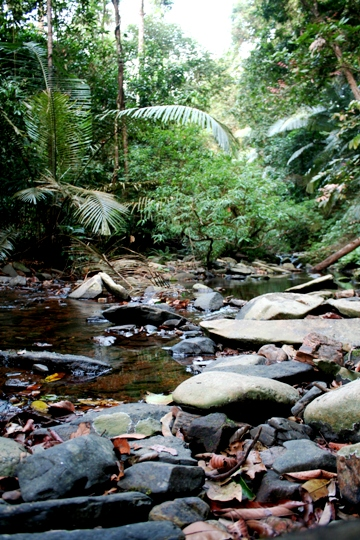 A forest stream in the Karnatakan Western Ghats, where three new species of fish were discovered in recent years. Photo by: Morgan Erickson-Davis.