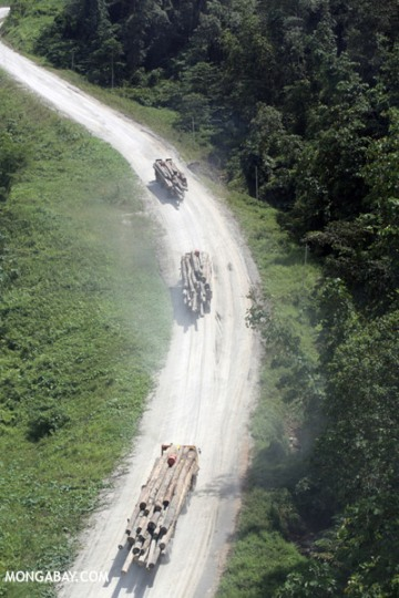 This logging road in Sabah, Borneo may also be a travel route for invasive plant species. Photo by: Rhett A. Butler.
