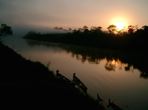 The Amazon rainforest contains nearly 400 billion trees belonging to 16,000 species. Photo by: Tim Baker.