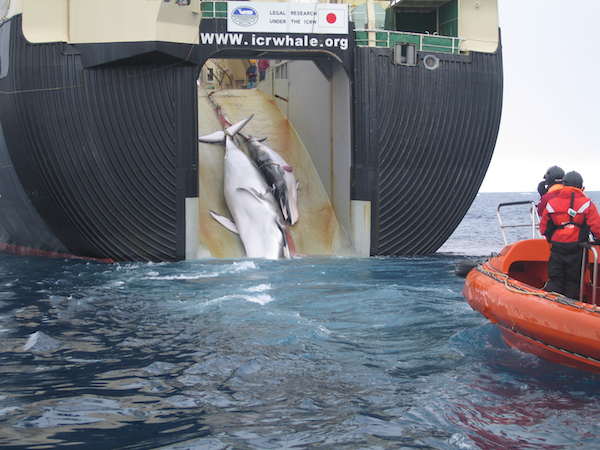 Court partially stops Japan's 'scientific' whaling, but Pacific harvests to continue