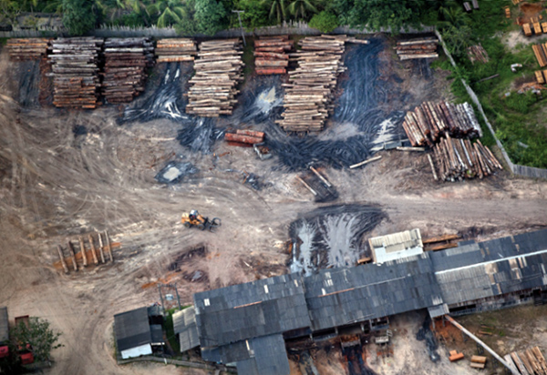Sawmill in Para State