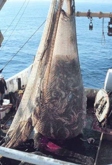 A trawling net with its catch before it is dumped out on deck.