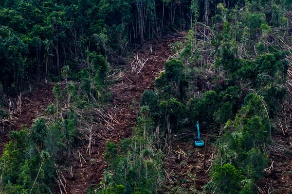 Destruction active des forêts de tourbières à l'intérieur d'une concession de pâte à papier PT. Riau Andaman Pulp & Paper (PT RAPP) sur Pulau Pedang, régence de Bengkalis, dans la Province de Riau