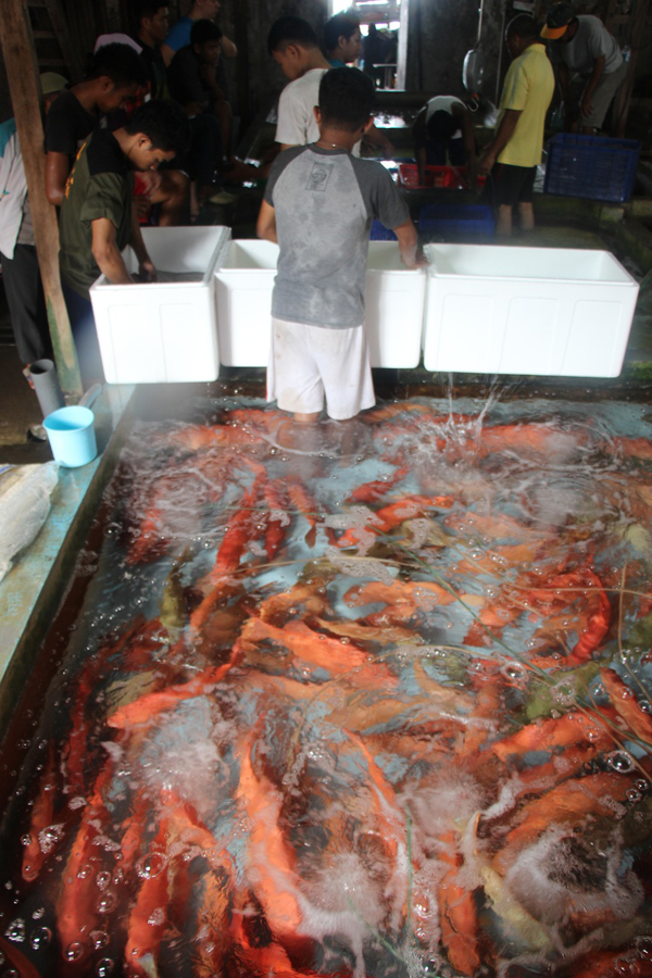 Reporter's Journal: from the fish warehouse