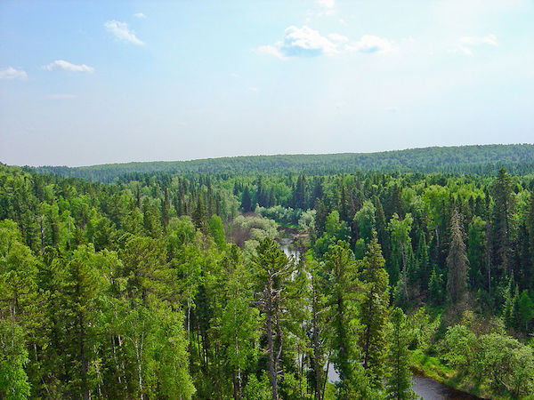 Ignoring boreal forests could speed up global warming