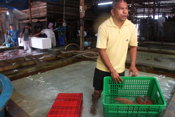 Cernie leopardo in preparazione per essere spedite via aereo a Hong Kong da un magazzino a Makassar. Le conversazioni avute con pescatori, compratori e con i proprietari del magazzino hanno rivelato che un pesce catturato a Spermonde può arrivare a Hong Kong entro due giorni. Foto di Melati Kaye (2014).