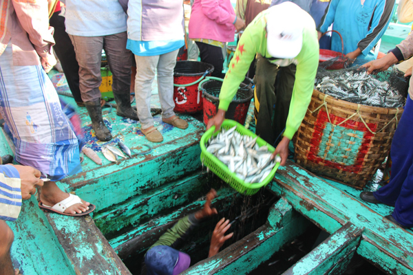 Purse seine crewmen load up wicker baskets with lemuru sardines to be delivered to a cannery as neighborhood fish traders watch, hoping to get a portion of the catch. Photo copyright (2014) Melati Kaye.
