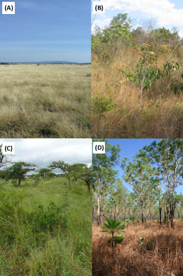 Tropical grassy biomes vary widely in species composition and tree cover. Photo by Parr et al.
