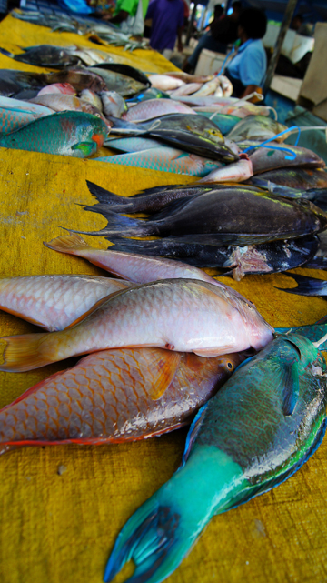 Middlemen sell bundles of parrotfish in local markets that may have been caught with or without a license. Photo copyright © 2014 Amy West.