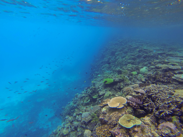 The vibrant reef life along Fiji's coasts attracts tourists and locals alike.  Photo copyright © 2014 Amy West.