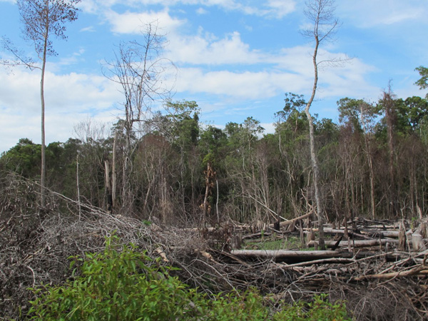 Singkil Swamp Forest Wildlife newly burned for palm plantations in Trumon, South Aceh District, Aceh. Photo: Chik Rini.